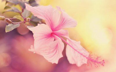 Body Stress Release – Ridurre lo stress e sanare il trauma.